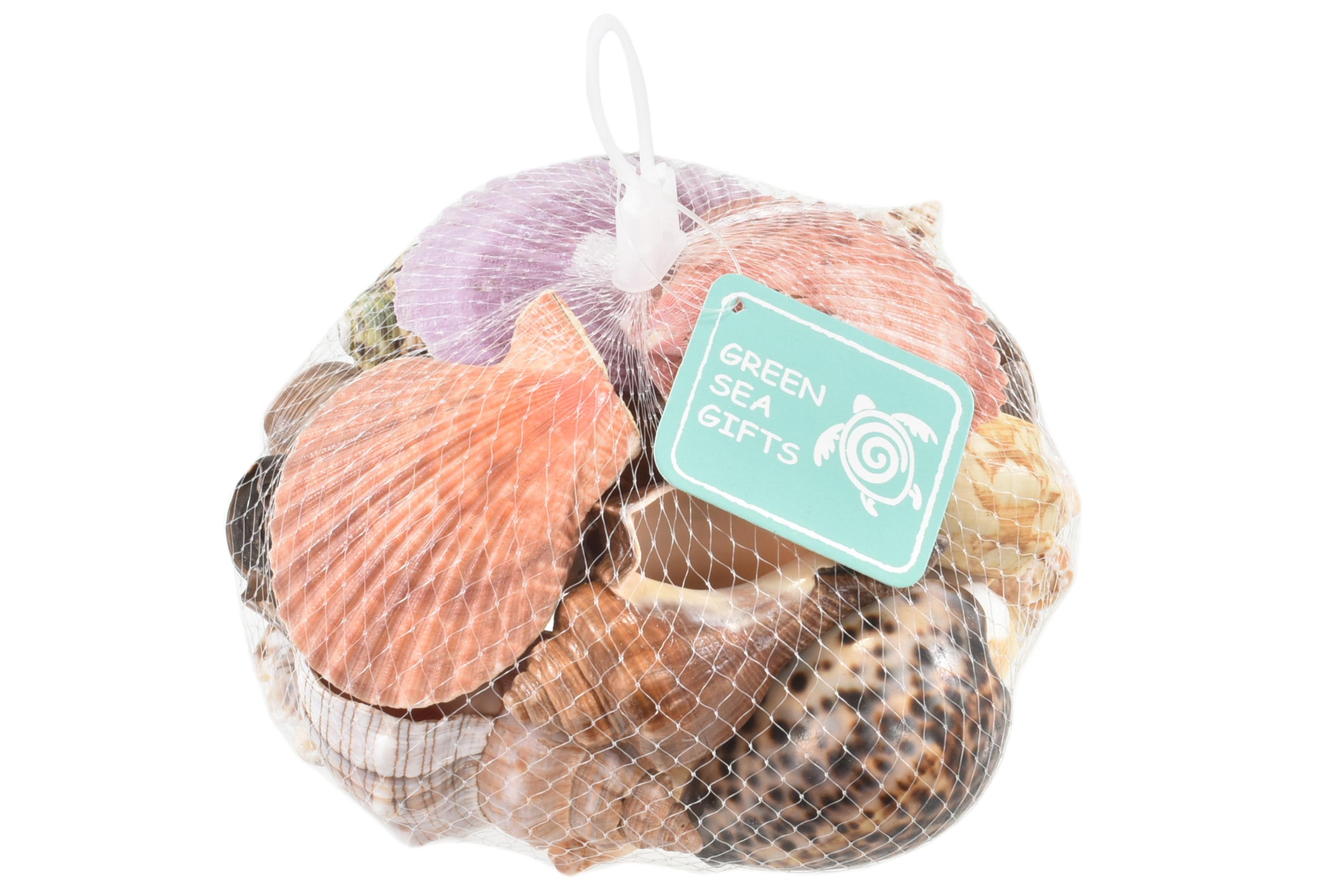 Large Polished Shells In Net Bag