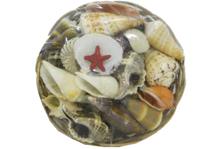 "4"" Shell Basket"