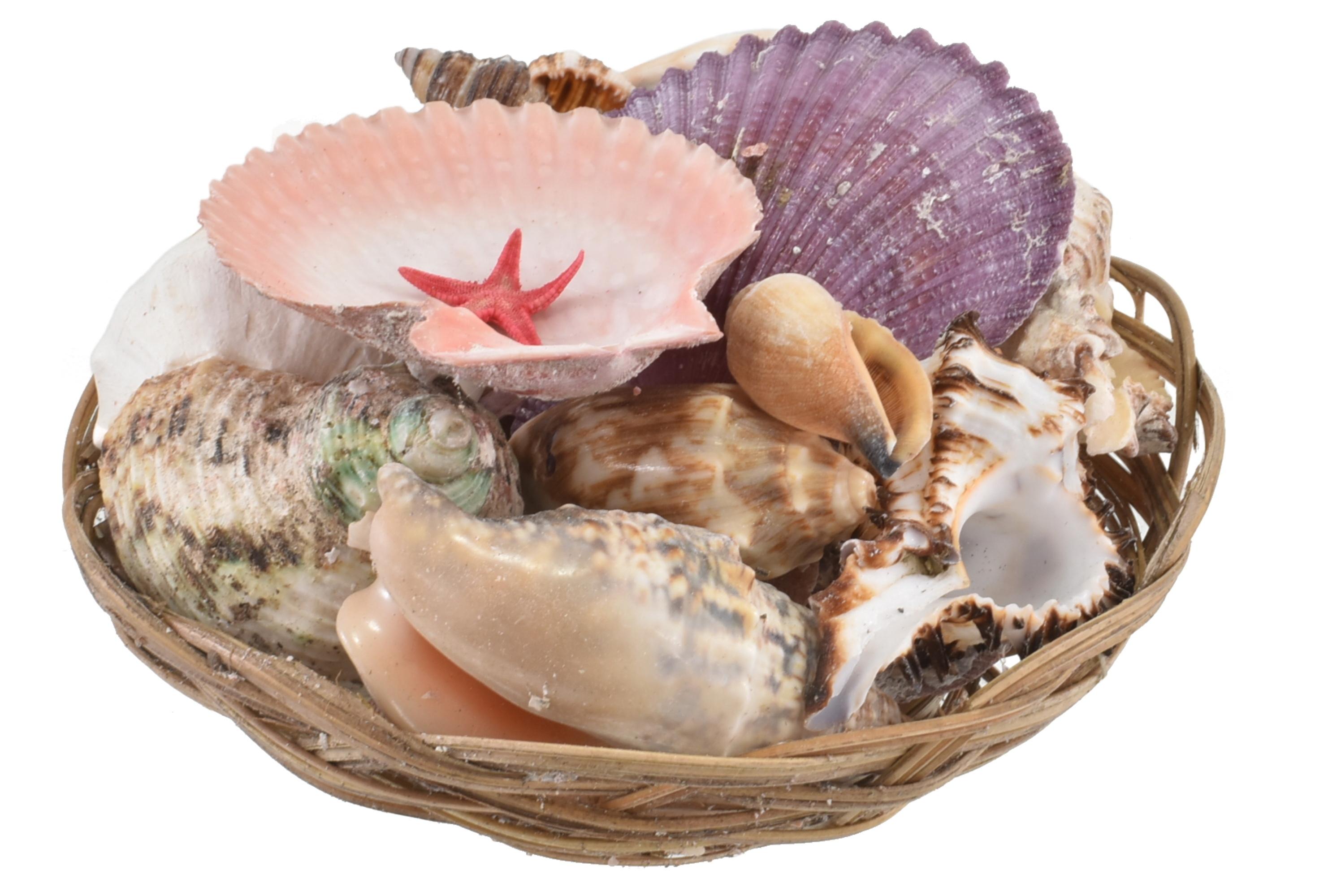 "6"" Shell Basket"