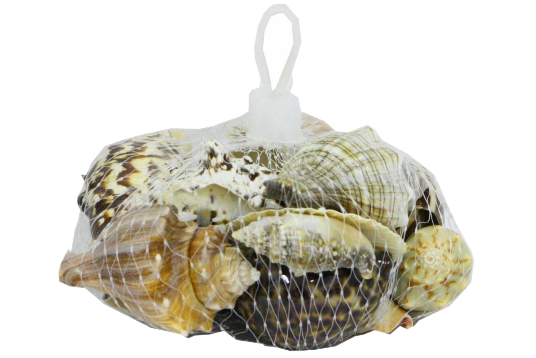 Polished Shells In Net Bag