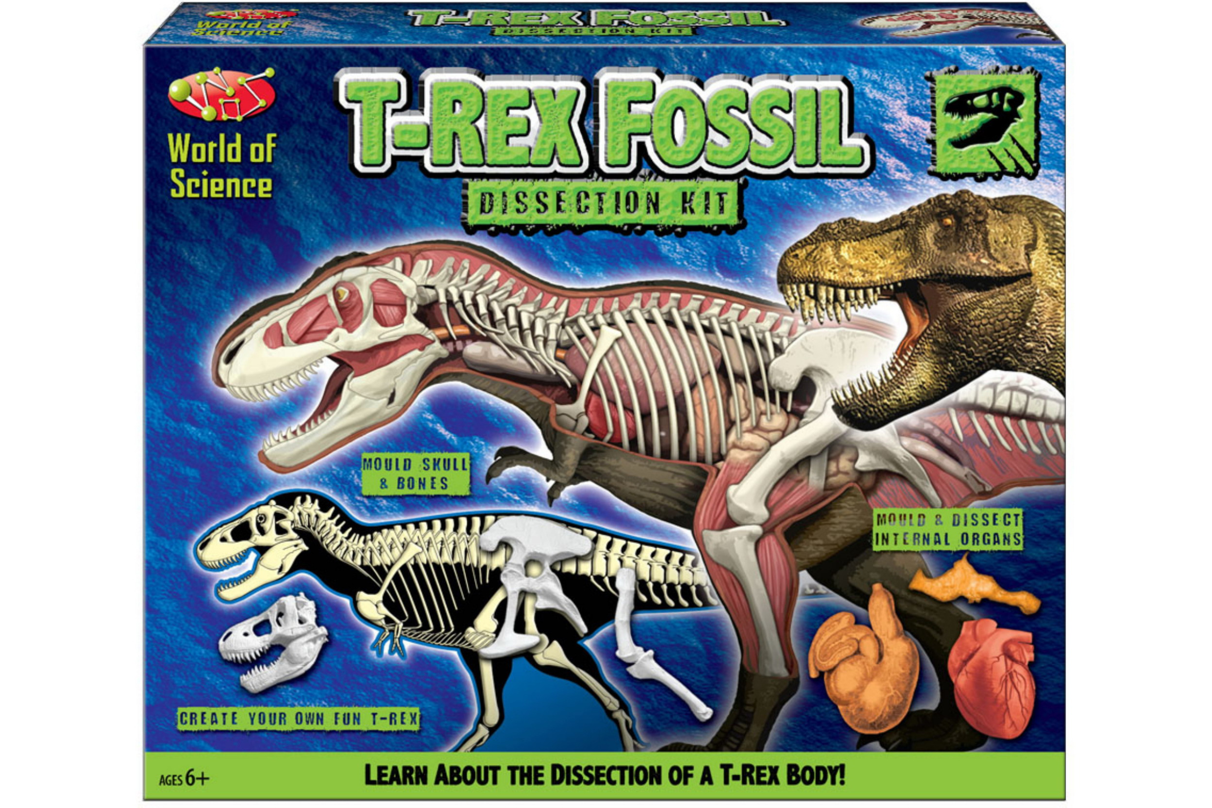 T-Rex Fossil Disector Kit In Colour Box