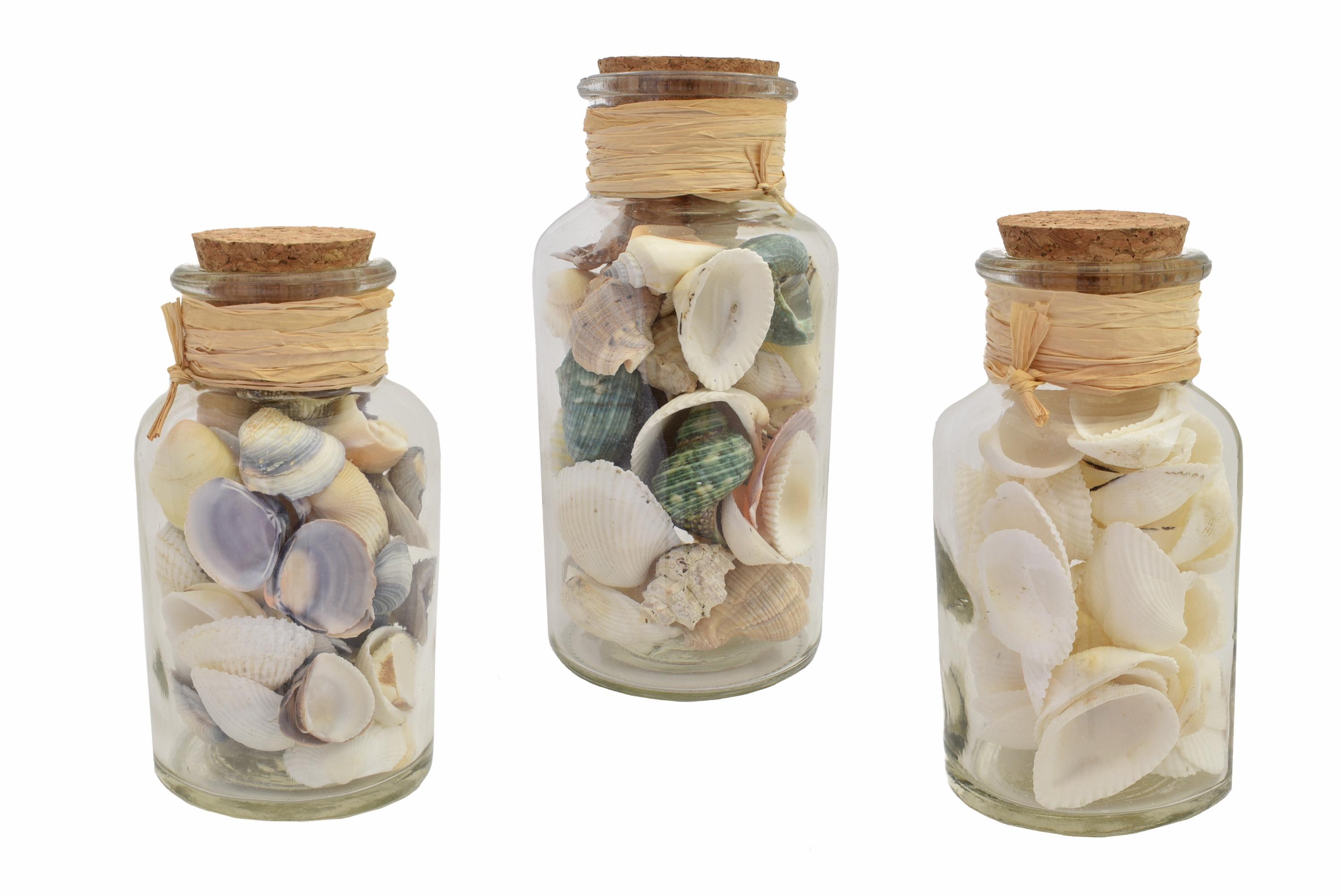 Shells In Glass Jar 16cm